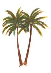Hand drawn acrylic vibrant summer green palm tree isolated on white background