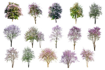 Collection Of Pink Flowers Trees Isolated On White Background.