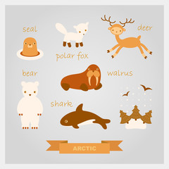 vector cartoon illustrations of polar animals