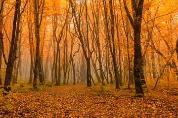 Scenic landscape of autumn forest