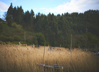A boat into brown grass
