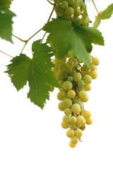Grappolo di uva isolato su sfondo bianco