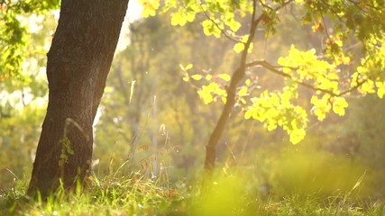 Fototapete - Autumn nature background with grass, trees and sun. Beautiful autumn scene. Slow motion 4K UHD video 3840x2160