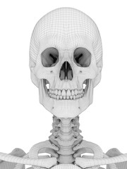 3d rendered medically accurate illustration of the skull