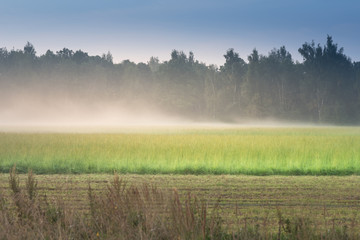 Mist in the green field near the forest in sunny summer morning