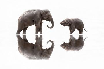 2 Elephants isolated on white background.