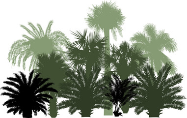 palm trees silhouettes group isolated on white