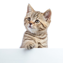 Pretty cat kitten peeking out of a blank sign, isolated on white background