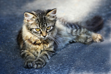 Kitten on the pavement.