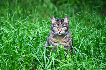 The cat in the green grass.