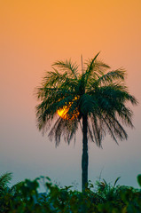 Beautiful sunset with sun going down in tall palm tree sticking out of forest, Guinea, West Africa