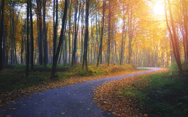 Autumn road in the colorful forest with sunlight
