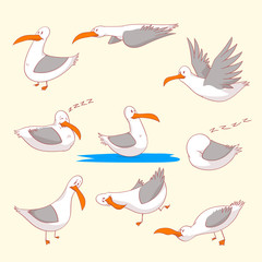 Collection of colorful vector illustrations of cartoon marine burds or seagulls in different positions