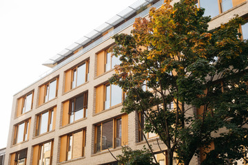office building with modern facade and autumn tree