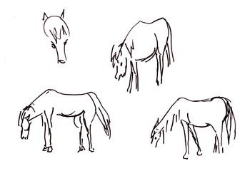 Instant sketch, horses