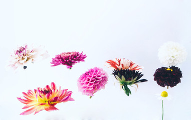 Levitating beautiful flowers under water on bright background. Colorful flower background. Place for your text.