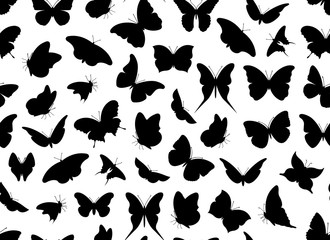 Butterfly seamless isolated on white