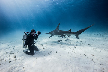 Diver taking underwater pictures of shark