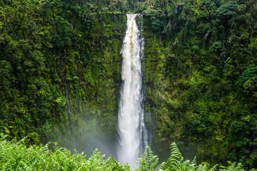 Akaka Falls 7