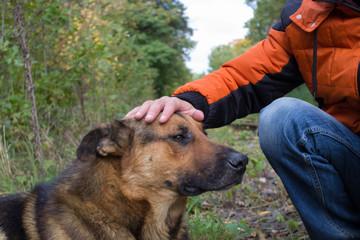 hand stroking dog