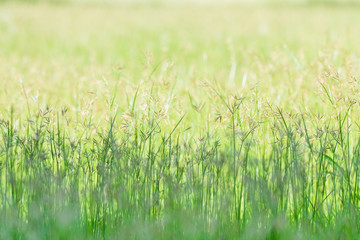 Spring meadow beautiful fresh morning in soft warm light. Vintage autumn landscape blurry nature background.