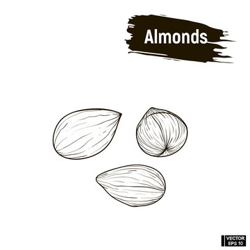 Outline image of almonds.
