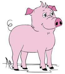 cartoon pink pig on the white backround