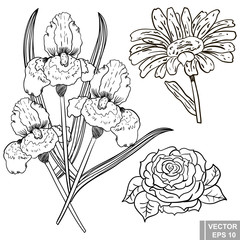 Flower. rose, iris, chamomile. manual drawing. Circuit. Plant. For your design.
