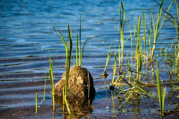 (Ein)Stein im See