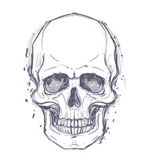 Sketchy style drawing of human skull, human head, isolated on white. Tattoo design element. Vector illustration.