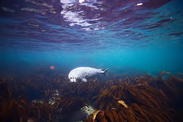 marine animals underwater photo