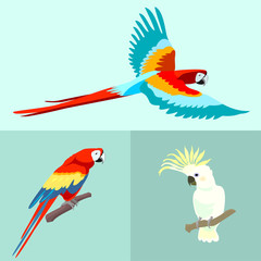 Flying Parrot Ara. Vector.