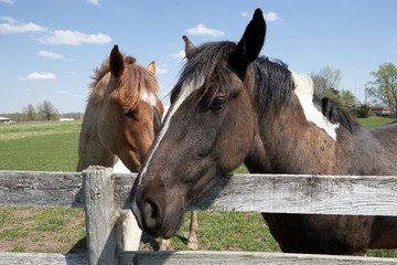 Two horses standing at farm fence