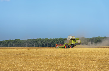 Fototapete - Combine harvester in action on wheat field.