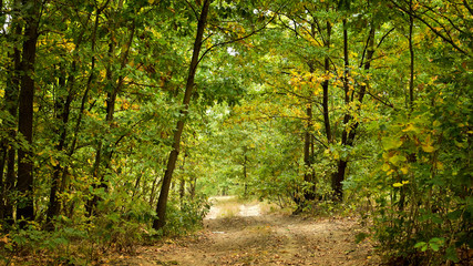Road in forest in early Autumn