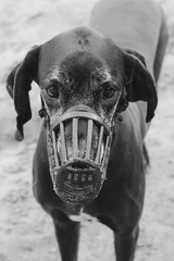 Dog with sand in the muzzle