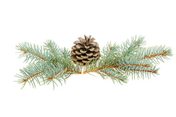 Spruce spruce and pine cone isolated on white background