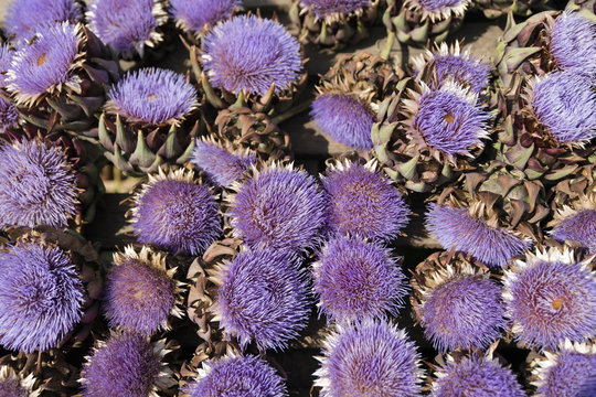 Close up of purple flowers