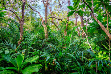 Scenic view of rainforest with ferns