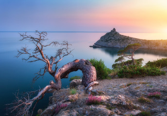 Wall Mural - Amazing old tree growing out of the rock at sunrise. Colorful landscape with tree, mountain, sea and blue sky in the morning. Summer in mountains at dusk. Travel. Nature background. Beautiful coast