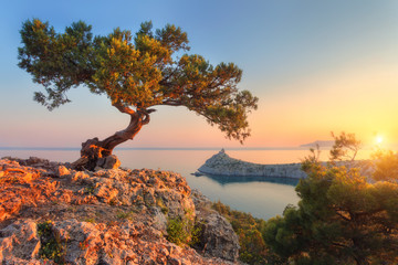Wall Mural - Amazing tree growing out of the rock at sunset. Colorful landscape with old tree with green leaves, blue sea, mountains and sky with sun in the evening. Summer travel in Crimea. Nature background
