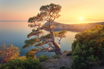 Wall Mural - Beautiful tree on the mountain at sunset. Colorful landscape with old tree with green leaves, blue sea, rocks and yellow sunlight in dusk. Summer forest. Travel in Crimea. Nature background. Scenery
