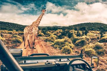 Wildlife african safari Wall mural