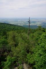 Obraz Wystające uschnięte drzewo ponad wierzchołki drzew w lasie - widok z wieży na Ślęży - fototapety do salonu