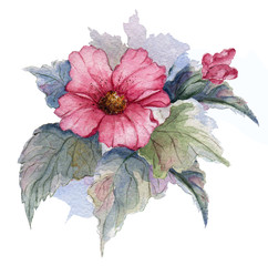 Flowering branch of red egyptian rose on white background. Watercolor illustration.