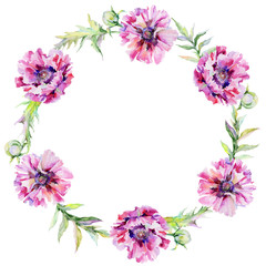 Wildflower poppy flower wreath in a watercolor style. Full name of the plant: pink poppy. Aquarelle wild flower for background, texture, wrapper pattern, frame or border.