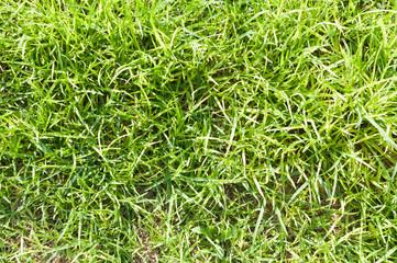 abandoned grass