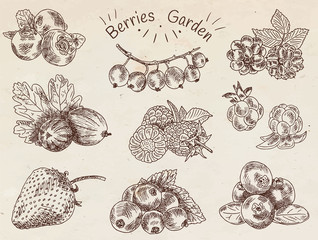 berries garden, blackberries, blackberry, boysenberry, currants, dewberry, gooseberries, mulberry, raspberry, strawberry, mountain ash, blueberry, cloud berry