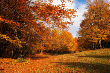 Printed roller blinds Magenta Autumn sunny woodland