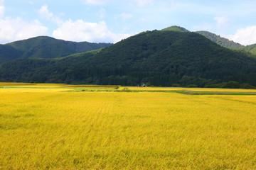 秋田県の美しい田園風景